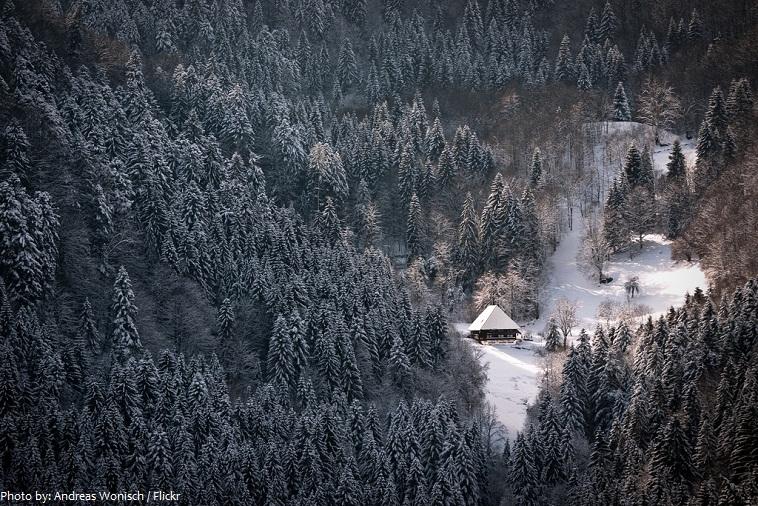 black-forest-4