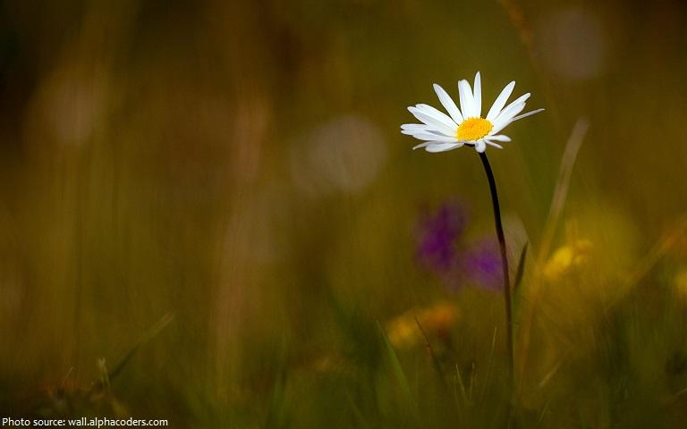 daisy-5