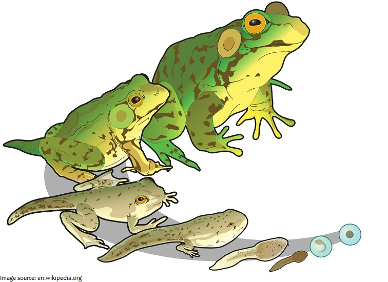 Interesting facts about frogs just fun facts for Frog transformation