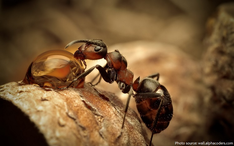ant drinking water