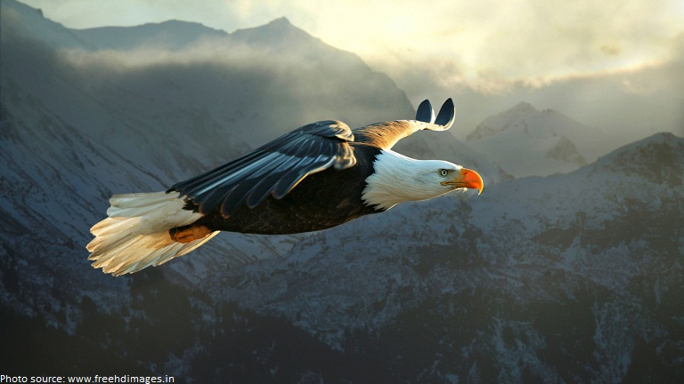 Photo Of Bald Eagle Soaring