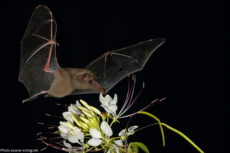 bat and flowers