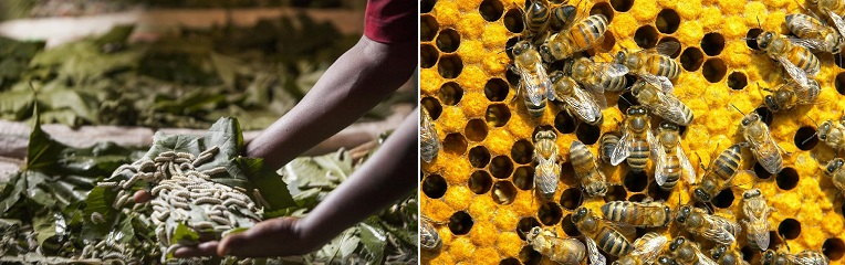 silkworms and bees