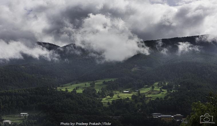 bhutan forest