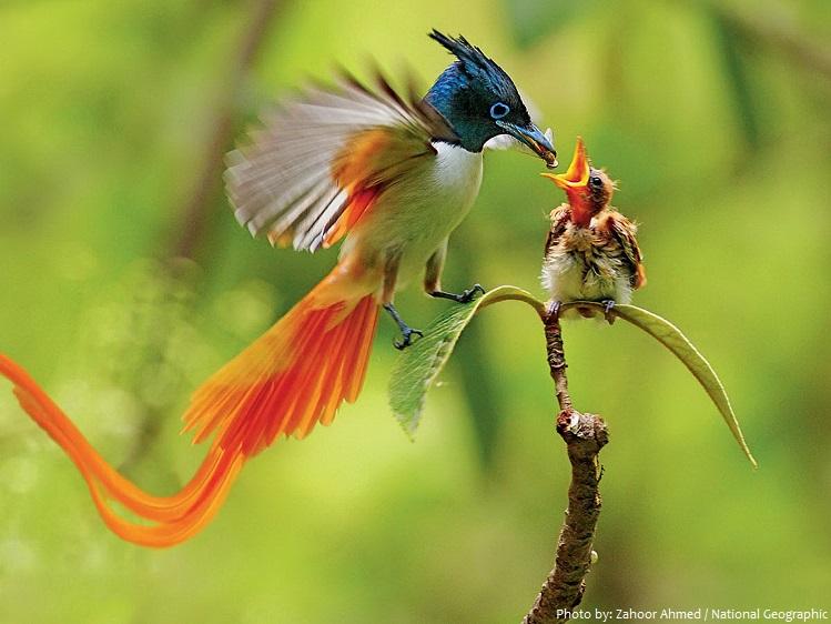 birds of paradise baby