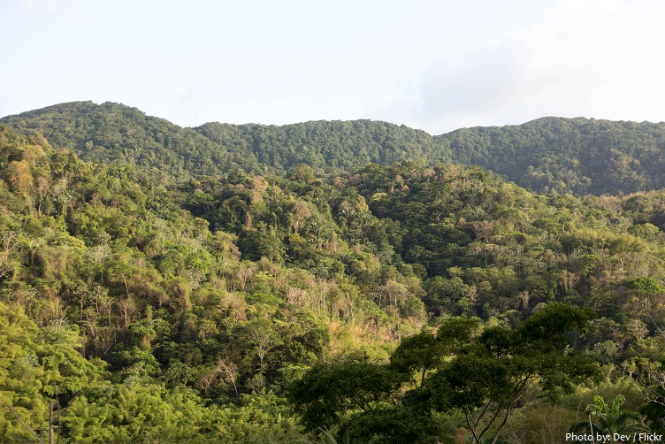 main ridge forest reserve tobago