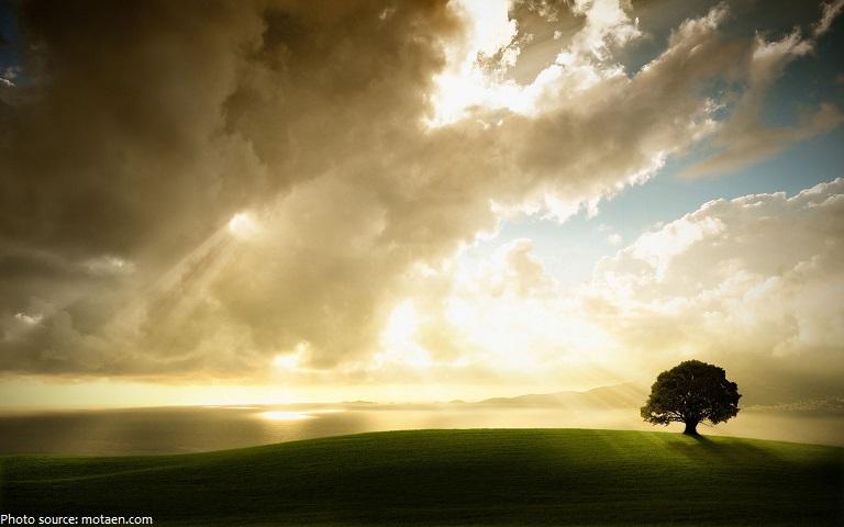oak-tree-3