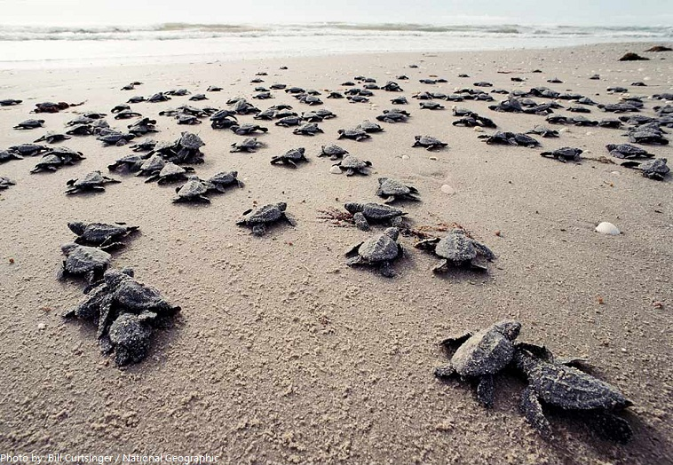 Interesting facts about turtles | Just Fun Facts