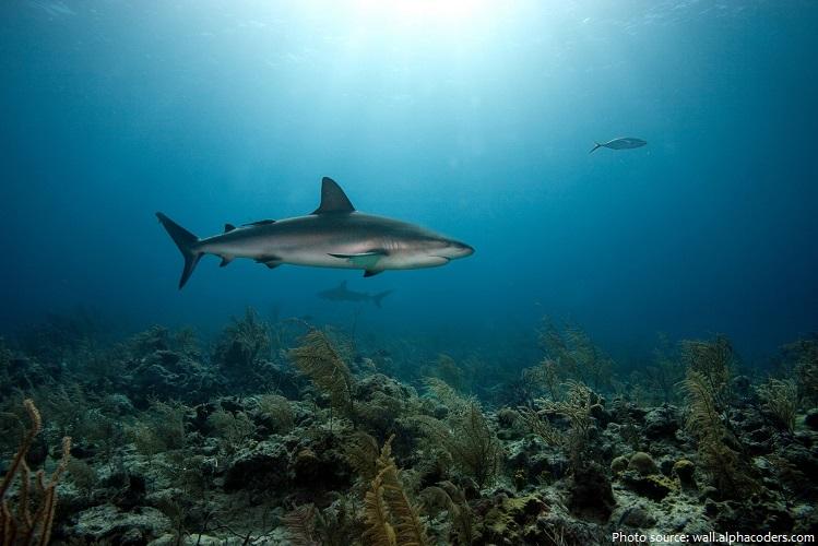 sharks-2