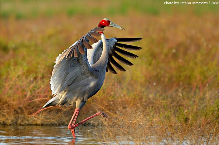 Interesting Facts About Cranes Just Fun Facts