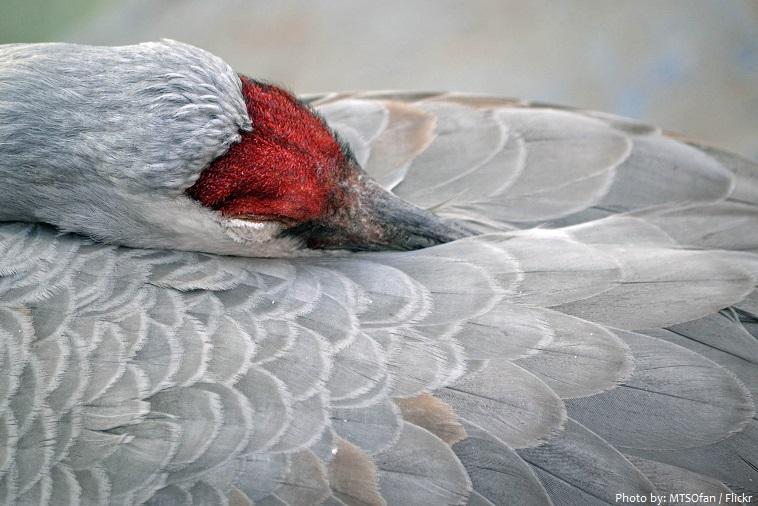 crane sleeping