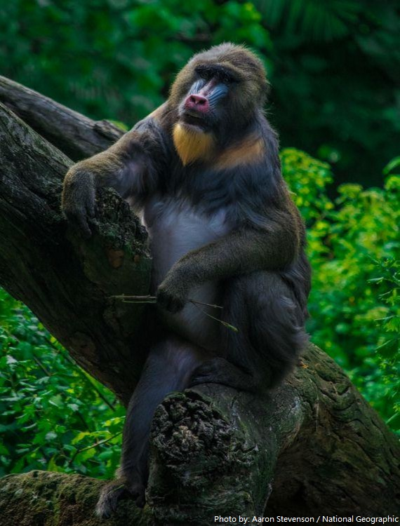 Interesting facts about monkeys | Just Fun Facts
