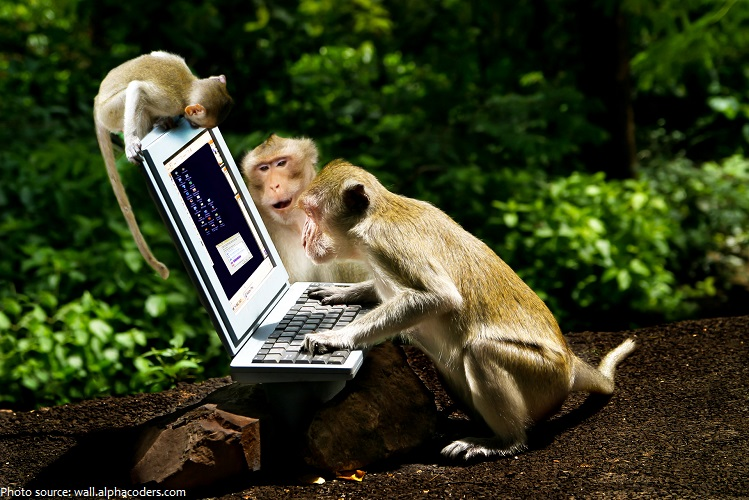 monkeys-10