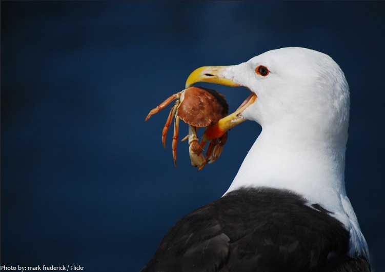 crab and seagull