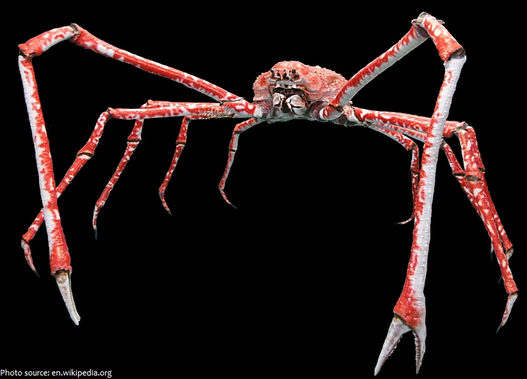 Interesting facts about crabs | Just Fun Facts