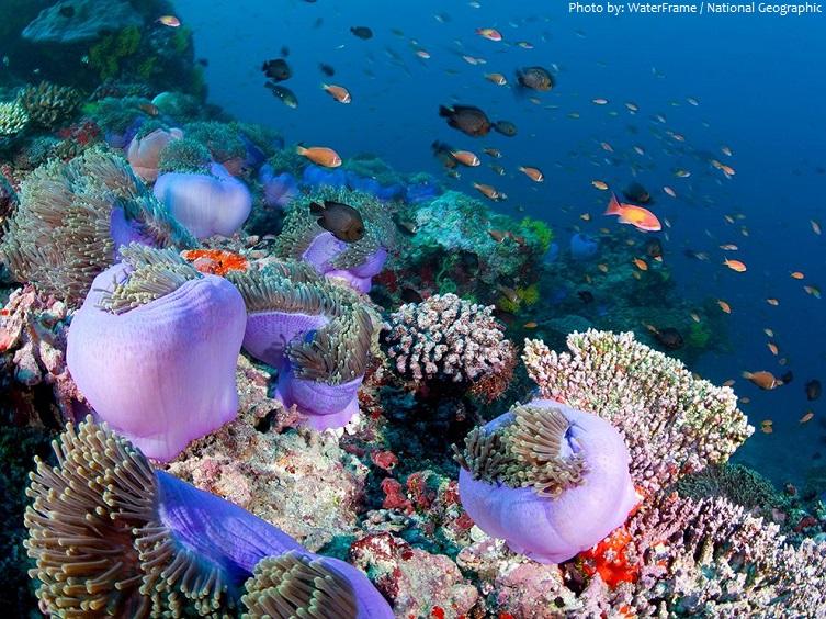 ari atoll maldives underwater