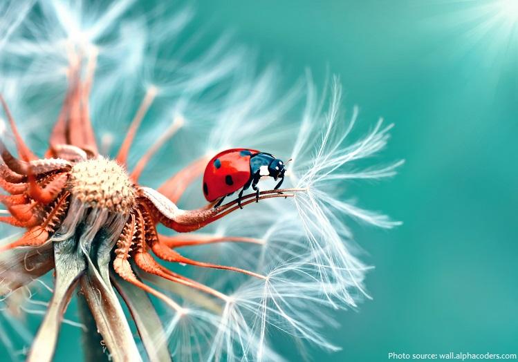 ladybug-5