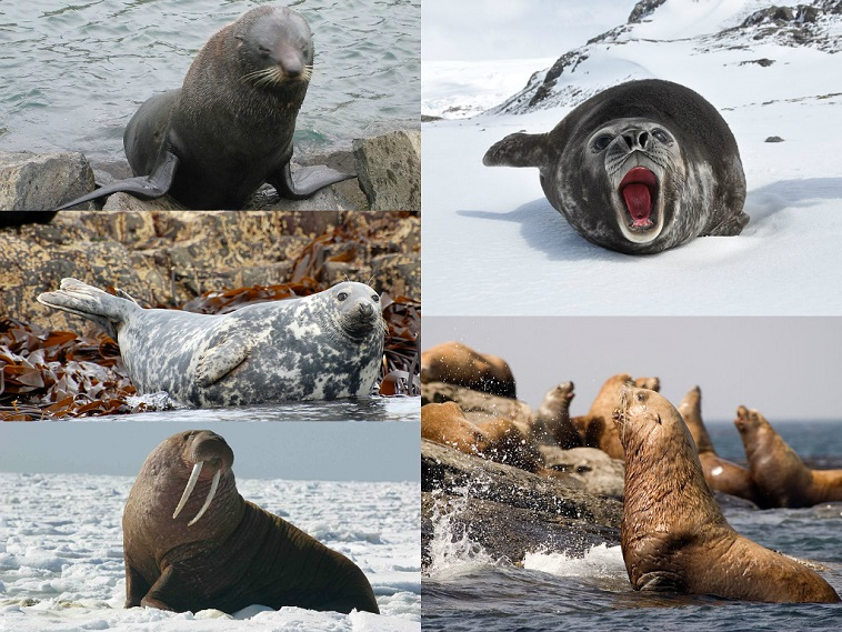 Interesting Facts About Seals Just Fun Facts