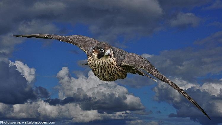 falcon-2