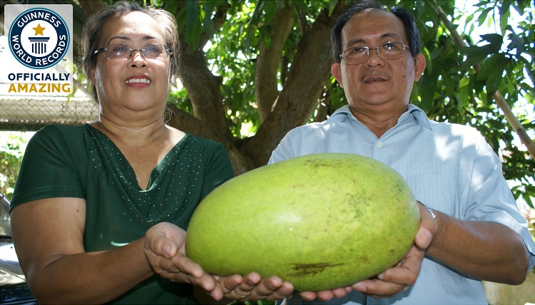 largest mango in the world