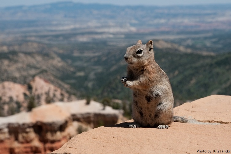 bryce canyon squirrel
