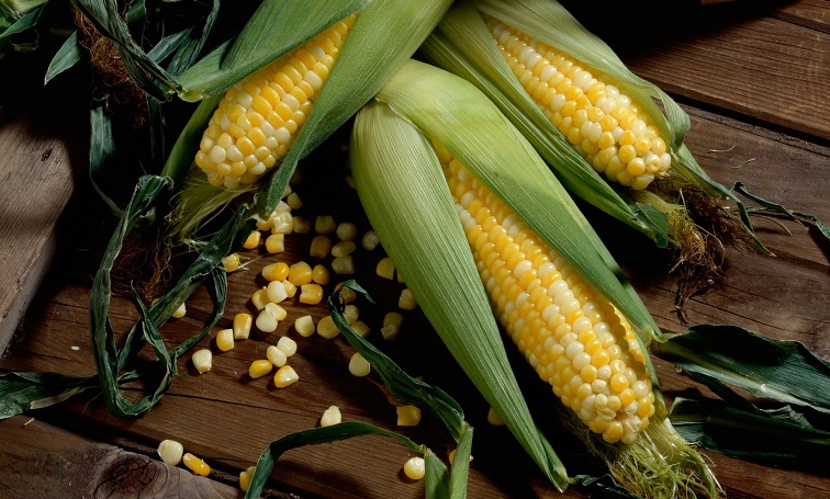 Interesting facts about corn | Just Fun Facts