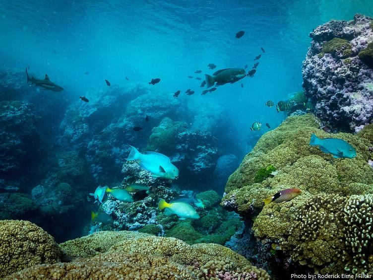 millenniu atoll kiribati underwater