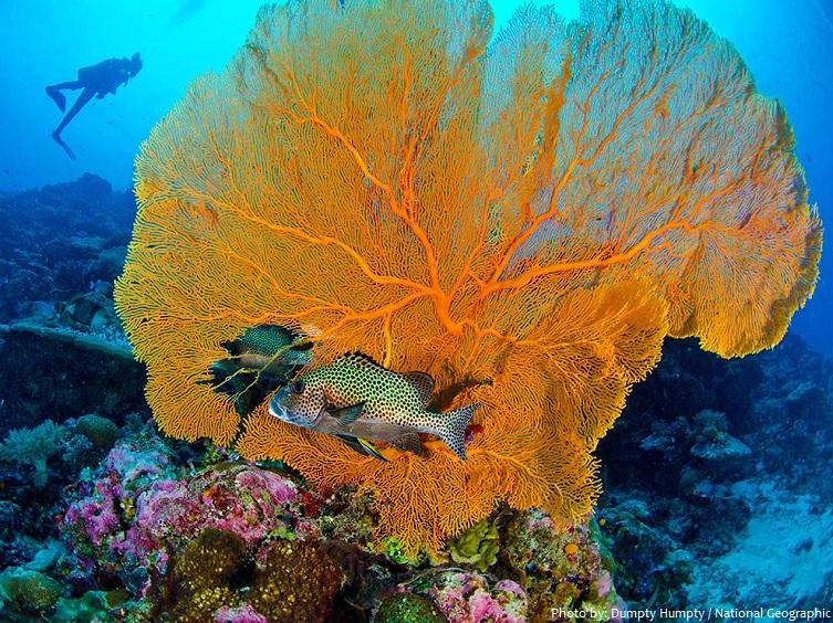 palau coral underwater