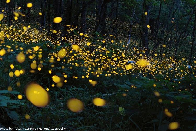 fireflies-4