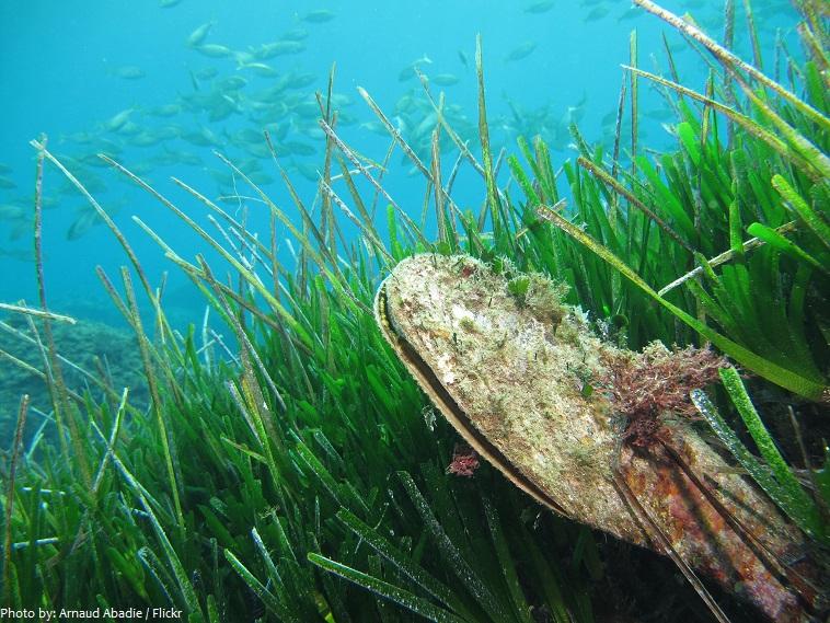 mediterranean sea underwater