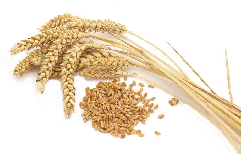 wheat-grains-2