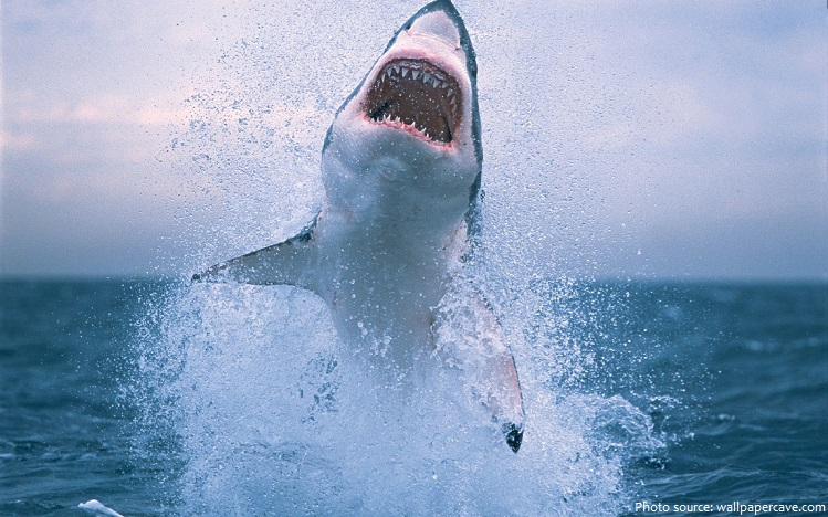 great white shark jump