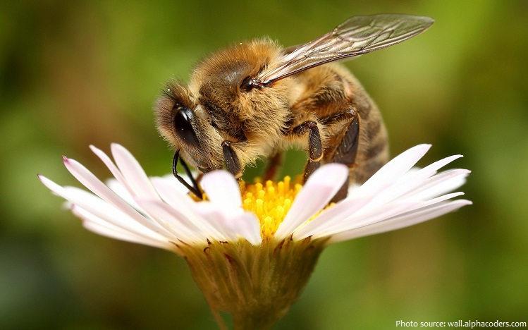 Interesting facts about honey bees | Just Fun Facts - photo#27