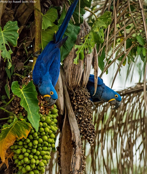 parrots eating nuts