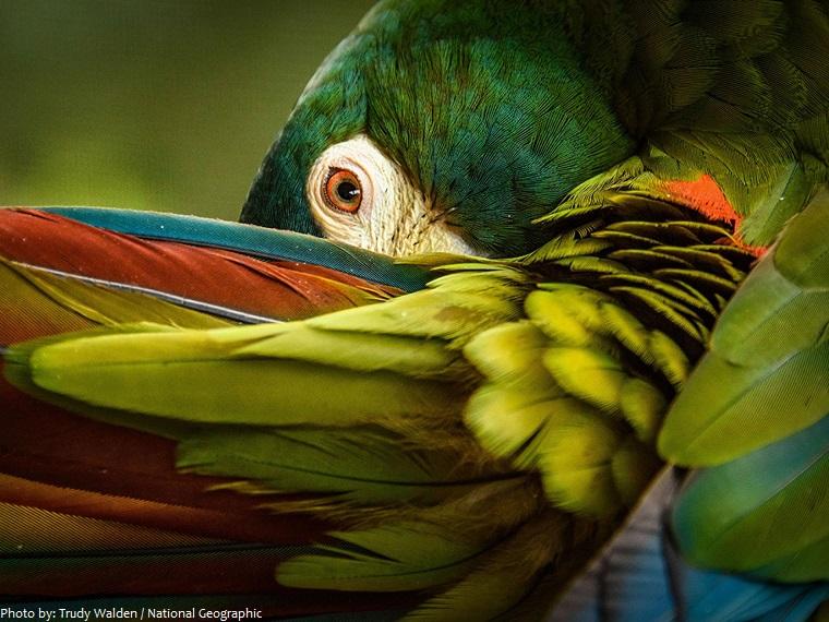 parrots plumage