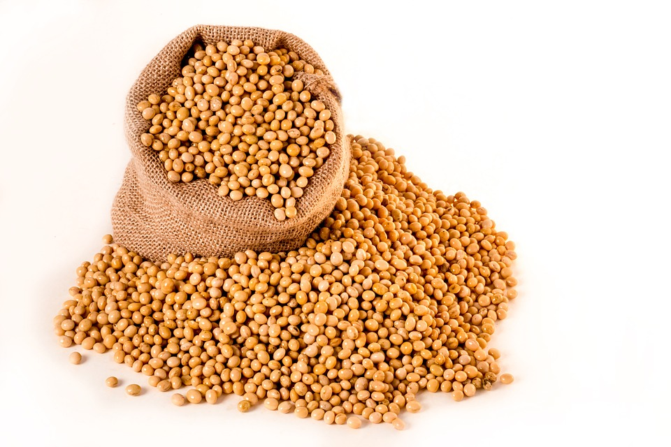 soybeans-2