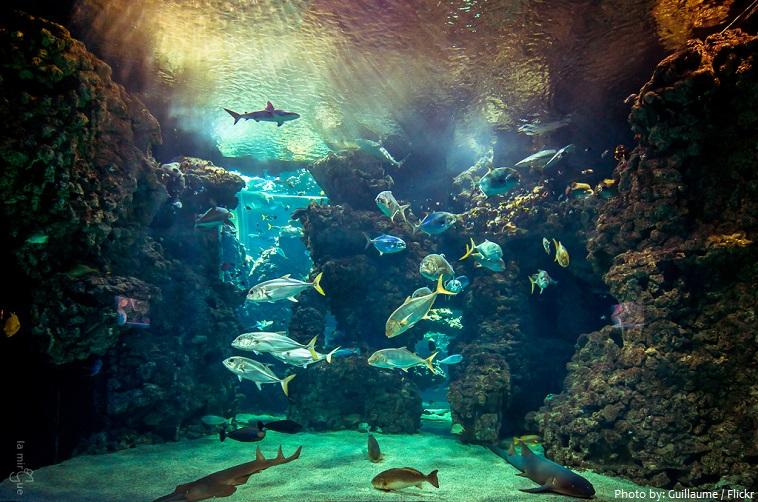 aquarium djibouti