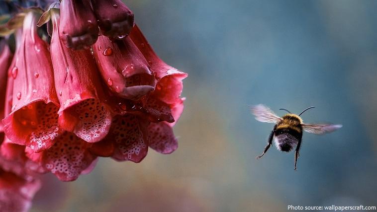 bumblebee flight