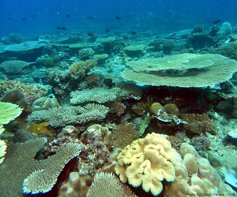 comoros underwater