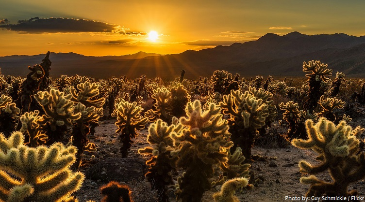 Interesting Facts About Joshua Tree National Park Just Fun Facts