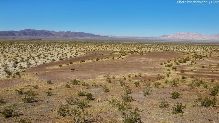 joshua tree national park colorado desert