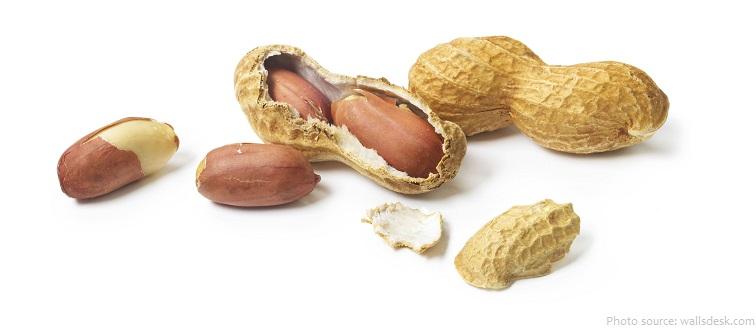 peanut pod