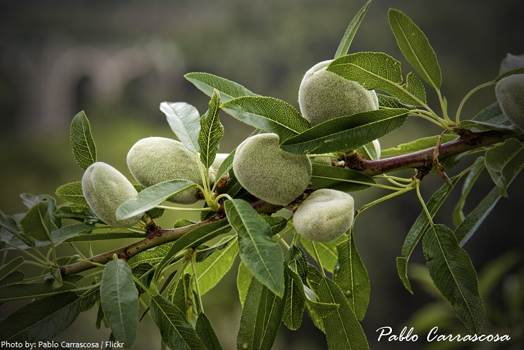 almond fruit