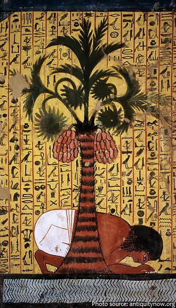 ancient egyptian palm trees