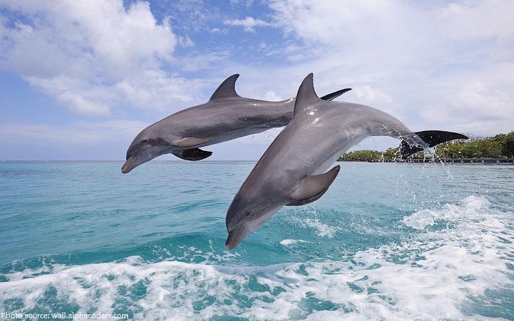 bottlenose-dolphins-2