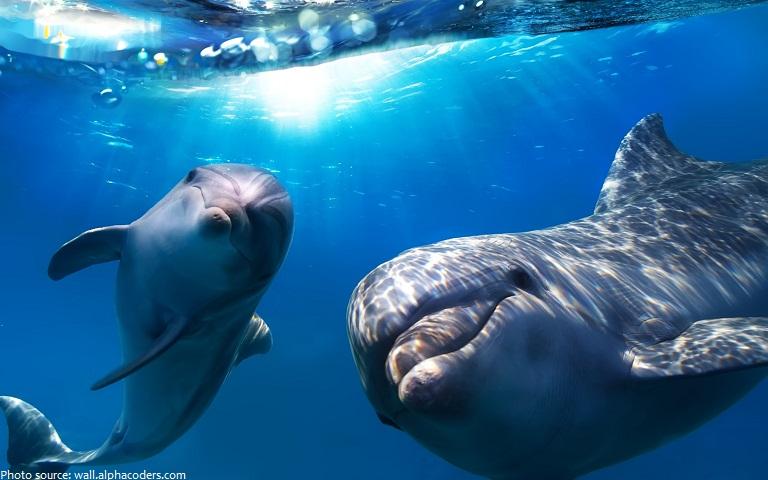 bottlenose-dolphins-4