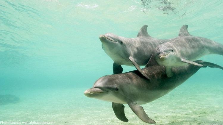 bottlenose-dolphins-5