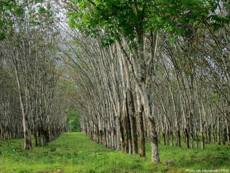firestone rubber plantation