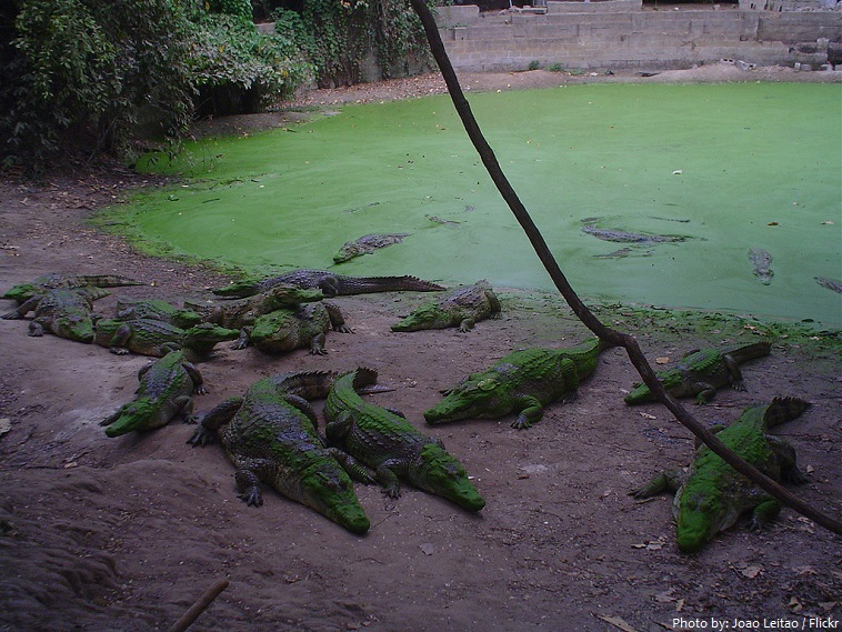 kachikally crocodile pool