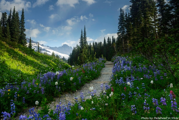 mount rainier national park trail